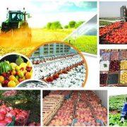 مرکز بازرگانی فردوسی-ferdowsi trading center-بررسی صادرات سیب و پرتقال، واردات موز و آناناس