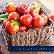 مرکز بازرگانی فردوسی-ferdowsi trading center-شرایط و قوانین صادرات سیب درختی به روسیه