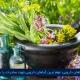 مرکز بازرگانی فردوسی-ferdowsi trading center-صادرات گیاهان دارویی