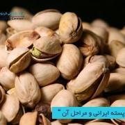 مرکز بازرگانی فردوسی-ferdowsi trading center-صادرات پسته ایرانی