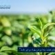 مرکز بازرگانی فردوسی-ferdowsi trading center-صادرات چای هند