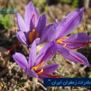 مرکز بازرگانی فردوسی-ferdowsi trading centerصادرات زعفران ایران