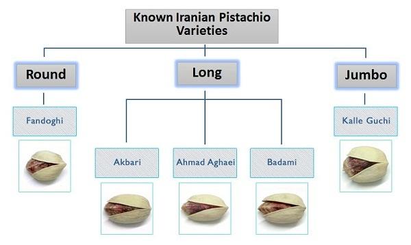انواع پسته ایرانی